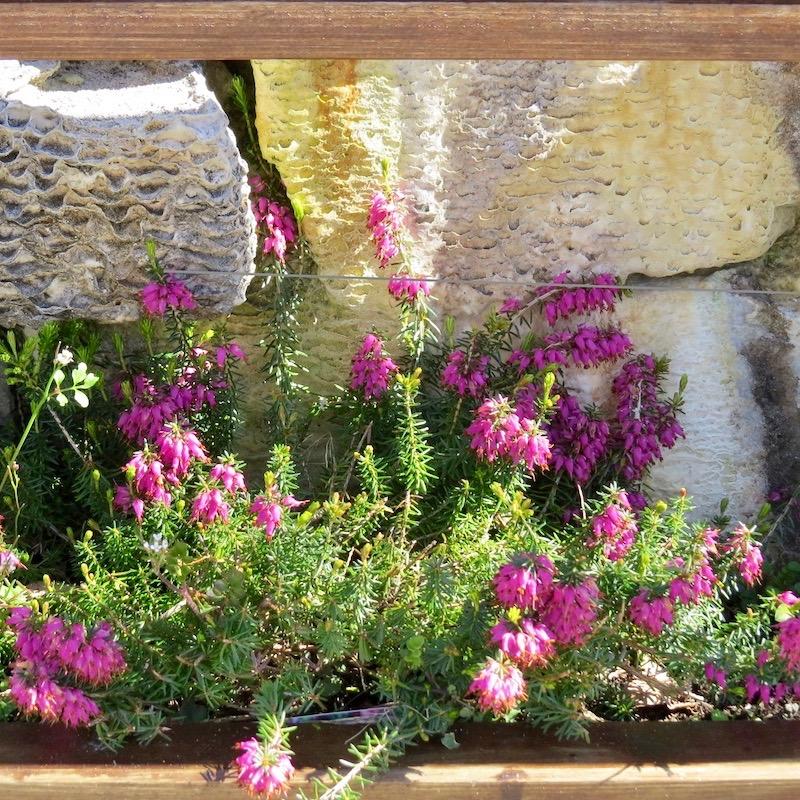 Glenuig Inn Garden Wall